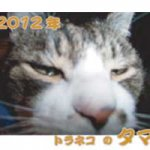 タマカレンダー2012
