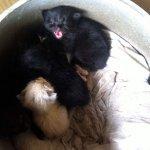 羽釜で生まれた子猫たち