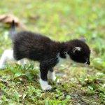 お釜から生まれた子猫