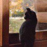 外を眺めるモコ
