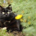 庭で遊ぶモコ