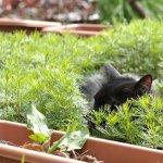 庭の草花に潜むモコ