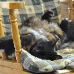 ロッキングチェアーで昼寝のモコ