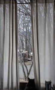 外を見るモコ