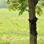 桜の木に登るモコ