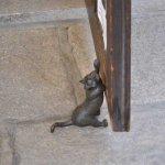 倉敷で見つけた黒猫